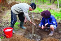 люди садят дерево