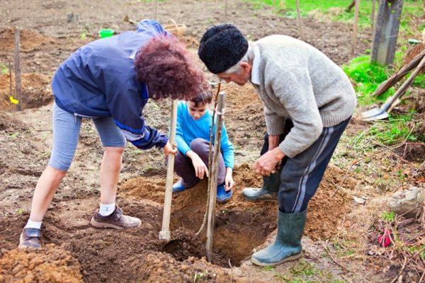 Посадка плодовых деревьев и кустарников осенью