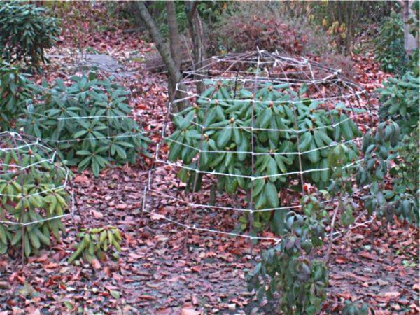 каркас для укрытия рододендрона на зиму