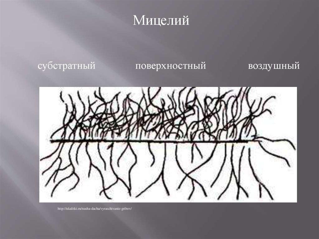 Виды мицелия