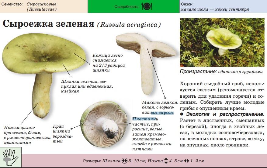 Общая информация и грибах