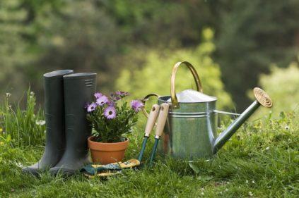 Как ухаживать за садом осенью