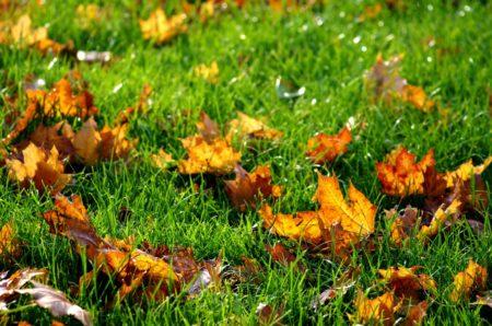Газон зимой. Как подготовить газон к зиме{q}