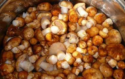 Подготовка грибов к засолке
