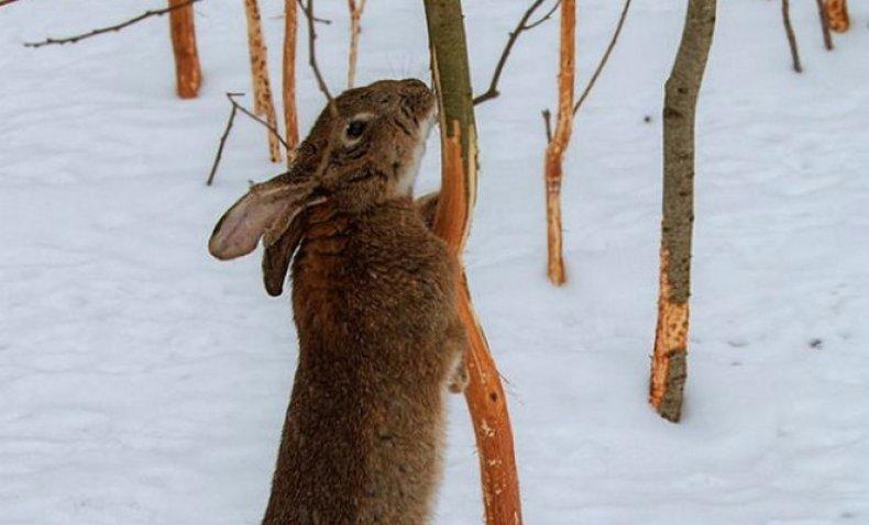 защита деревьев от зайцев