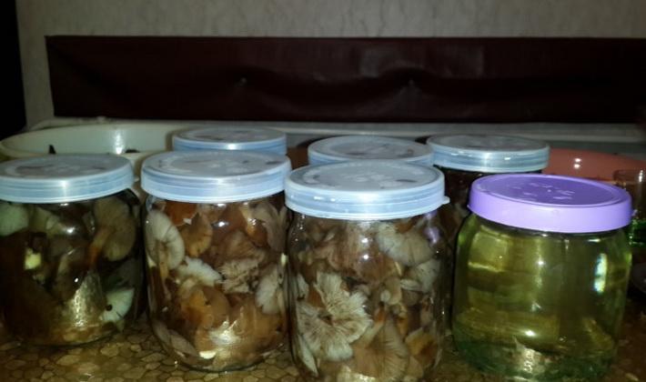 Засоленные грибы
