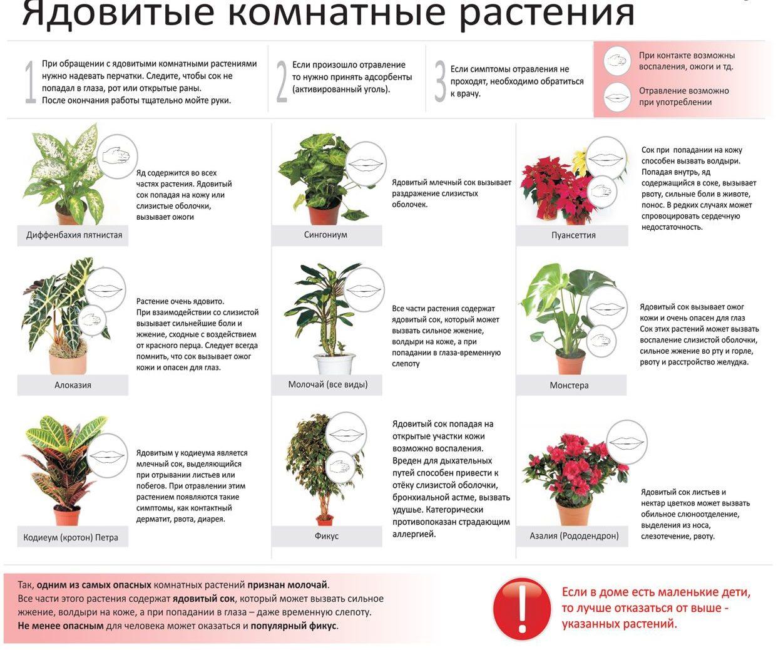 Список ядовитых комнатных цветов