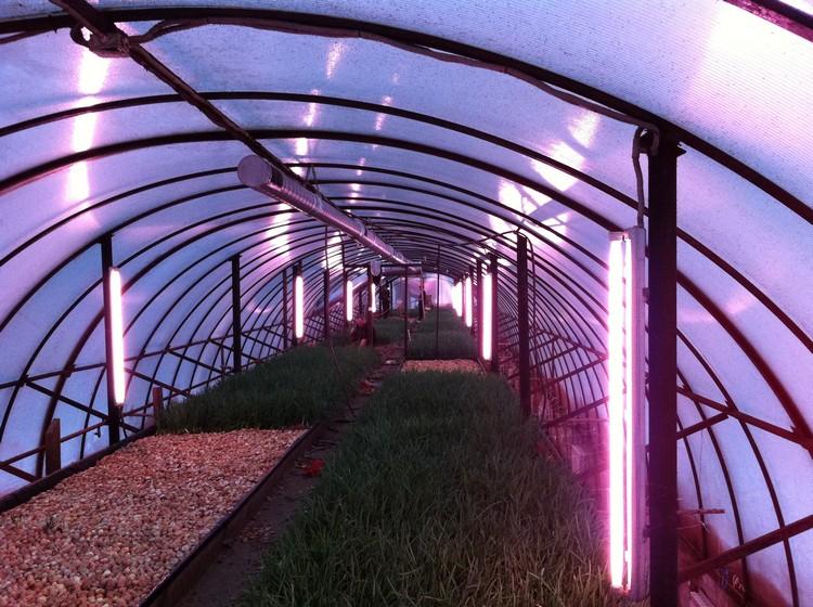 лампы для теплицы зимой какие выбрать