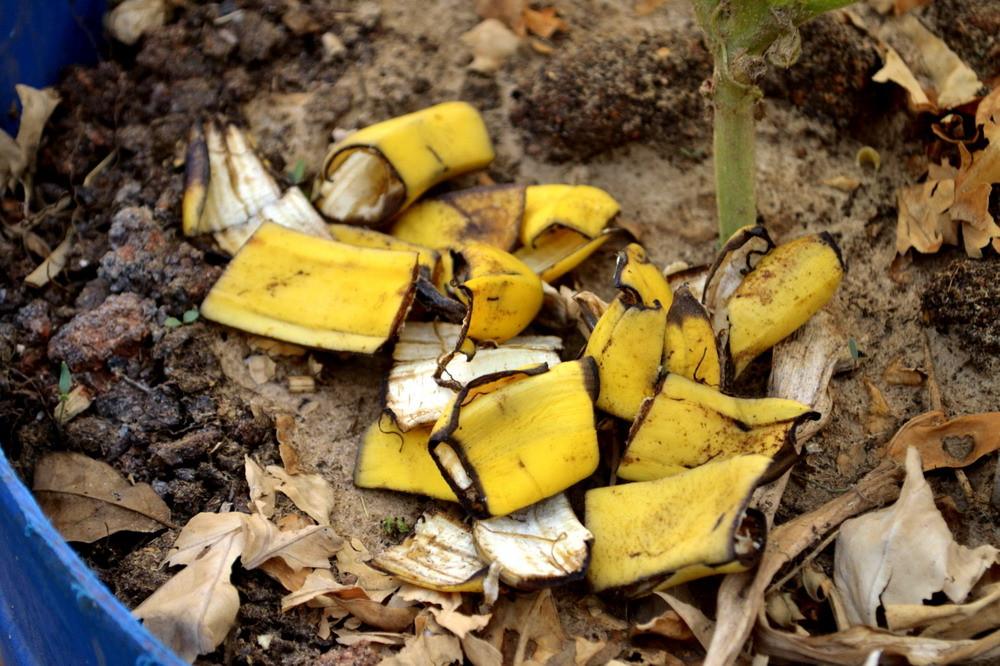 Шкурка банана как удобрение