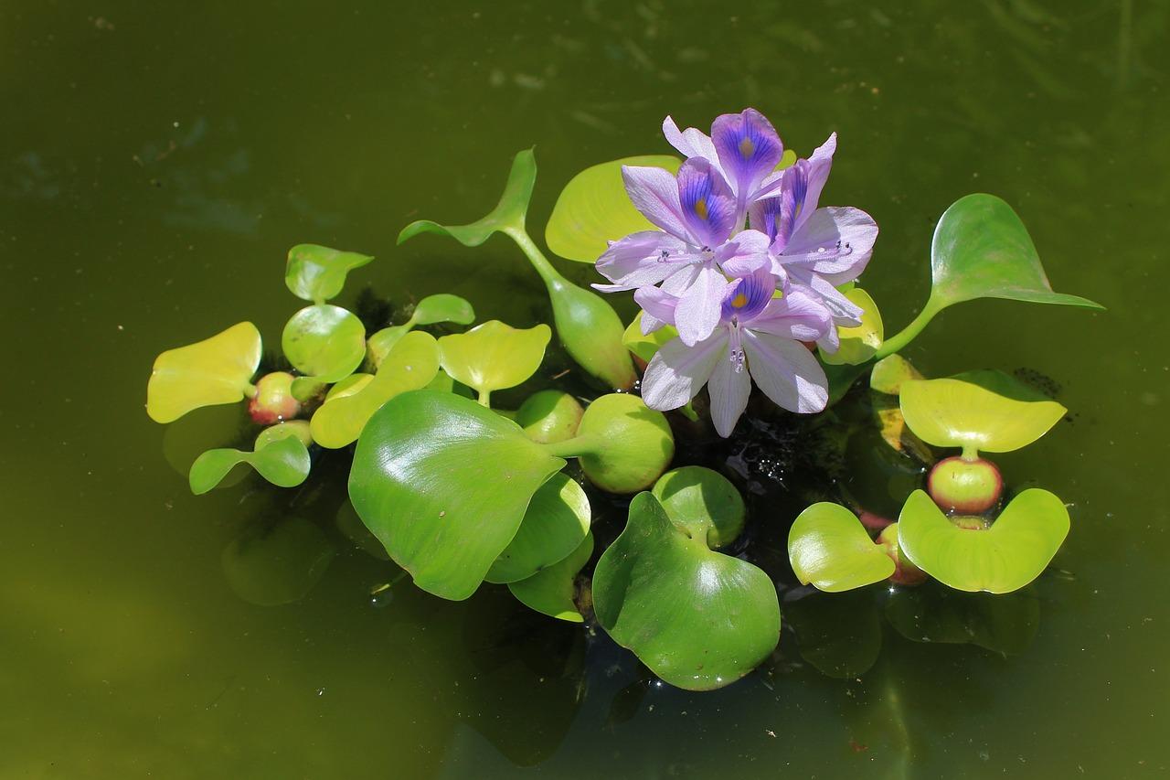 сухой водные растения названия элегантное