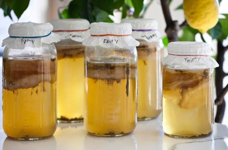 Чайный гриб из яблочного сока