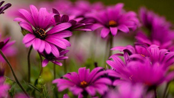 какие цветы сажать под зиму
