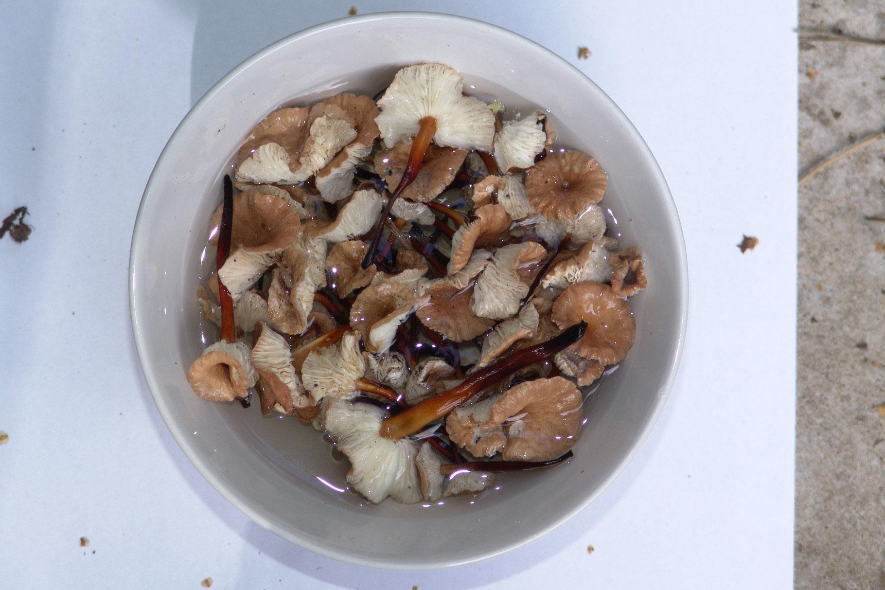 Подготовка грибов к приготовлению