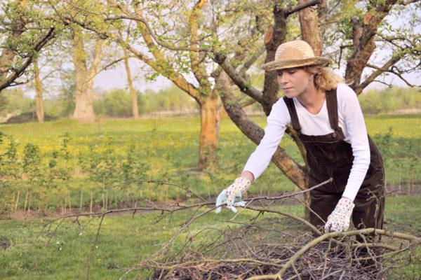 Какие работы надо проводить в саду осенью
