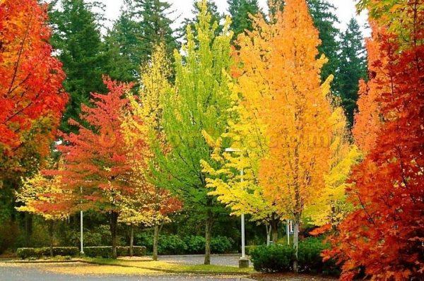листва осенью