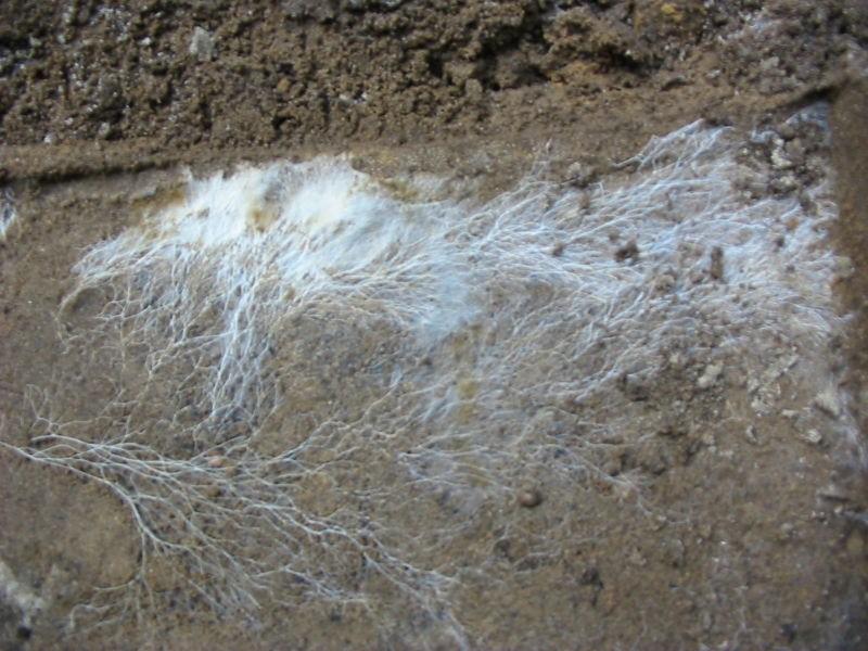 Появление мицелия