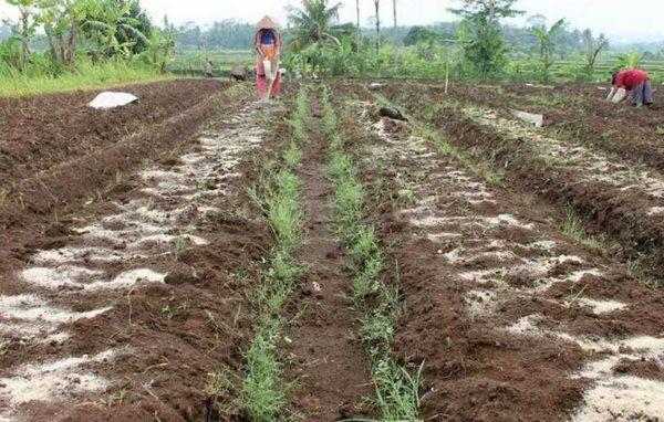 Как раскислить почву на участке