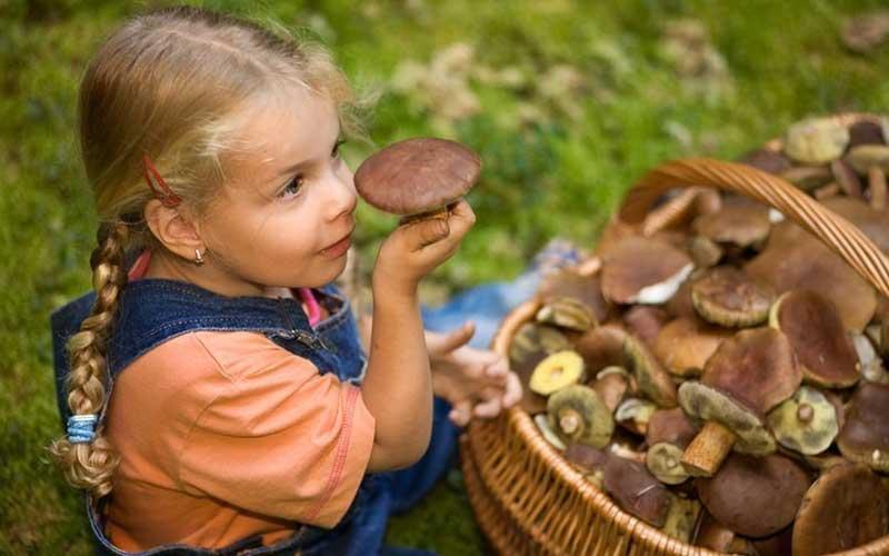 Особенности употребления грибов