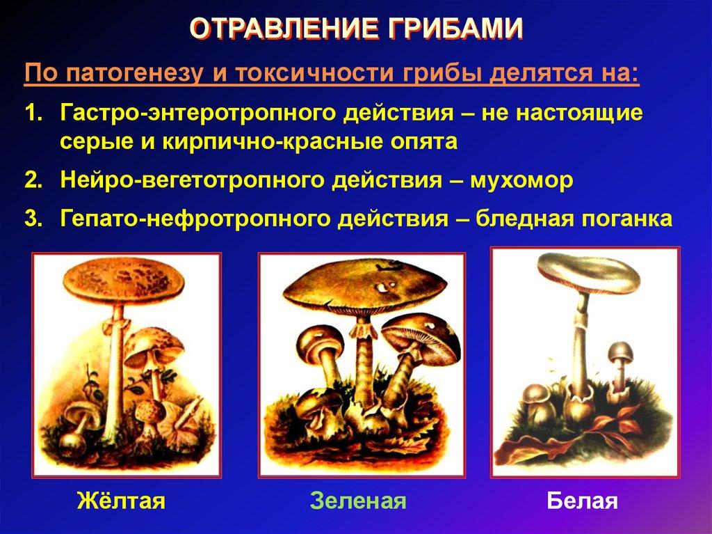 Виды отравлений грибами