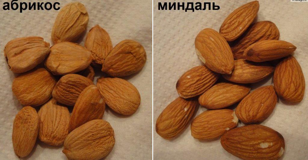 Миндаль и абрикосовые ядра