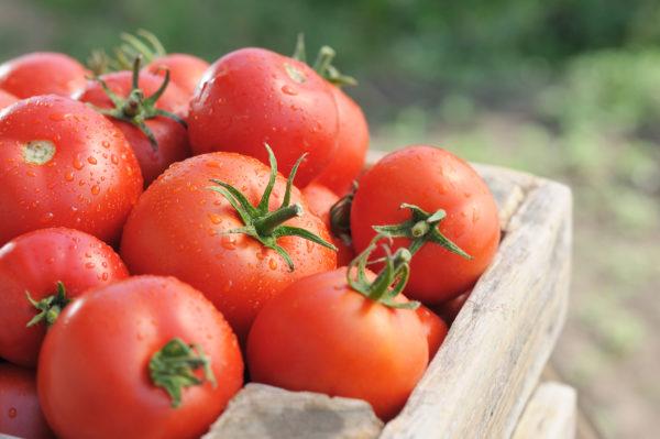 Лучшие сорта томатов: отзывы на 2019 год