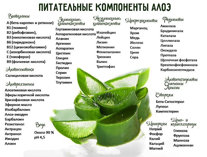 Питательные компоненты алоэ