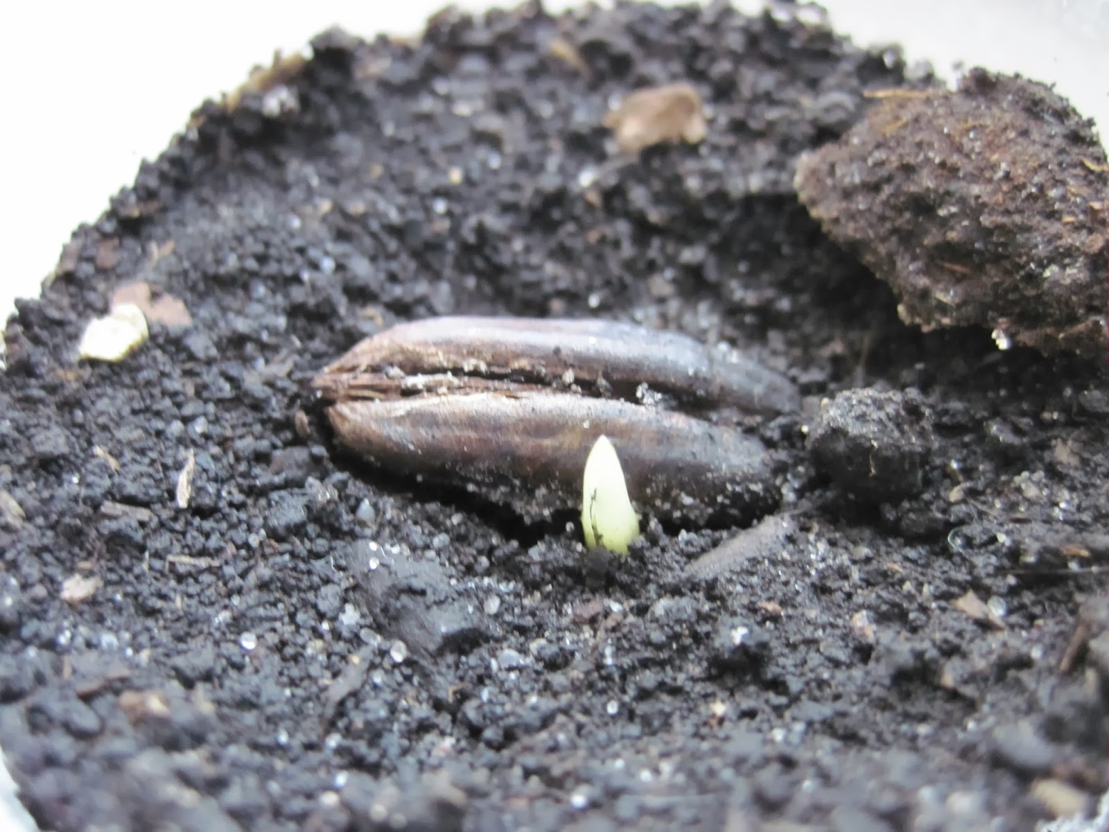 Почва для пальмы