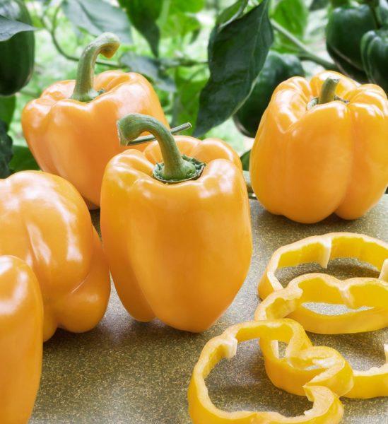 Самые выносливые сорта перца