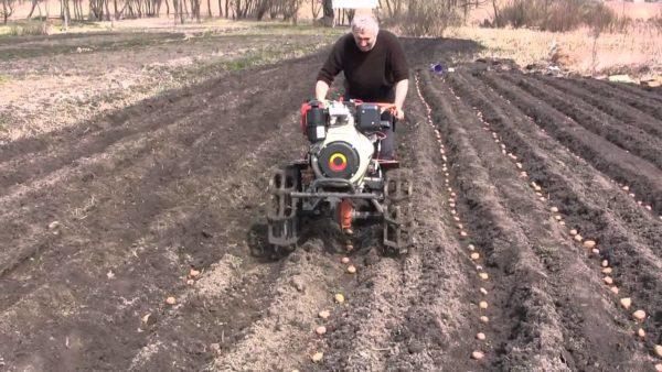 Народные приметы при посадке картошки