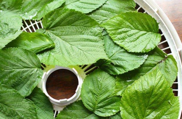 Полезные вещества в составе листьев малины