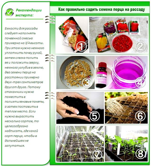 Правила посадки семян