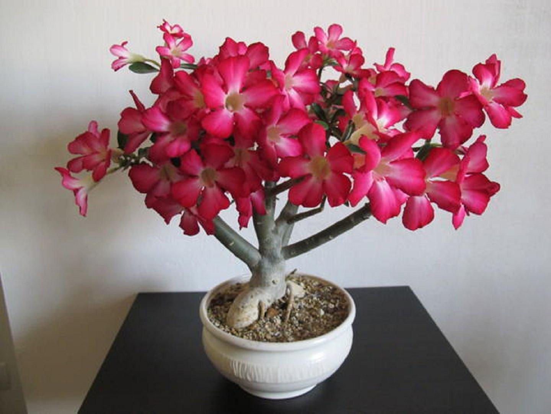 чем самые красивые комнатные цветы фото с названиями всегда таким