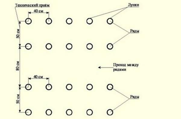 Рекомендуемая схема посадки огурцов в теплицах