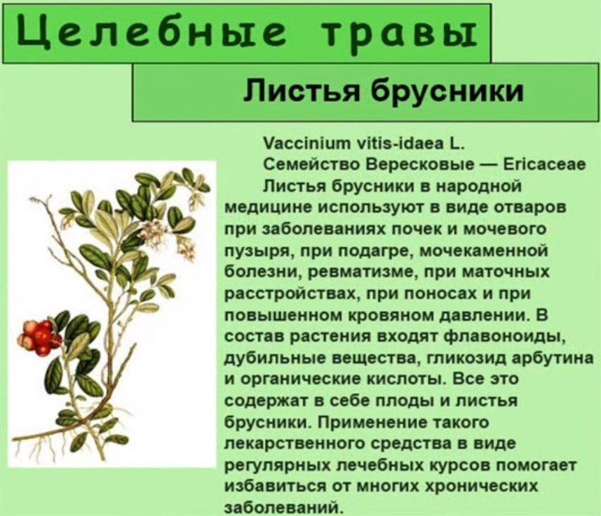 Целебные свойства листьев