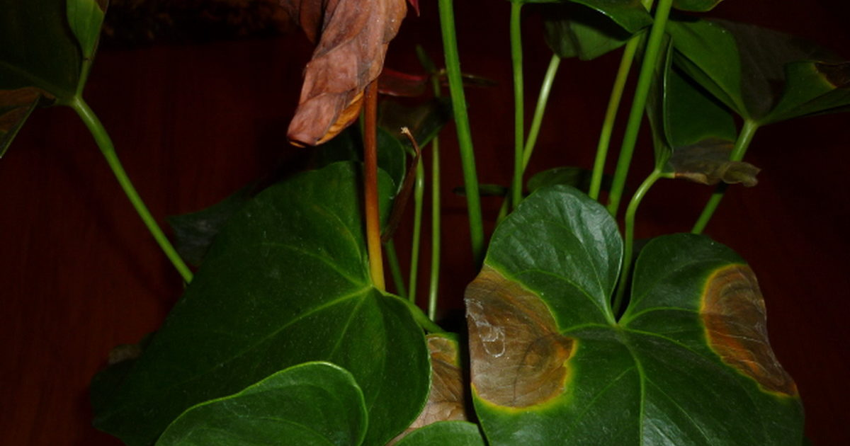 Болезни листьев