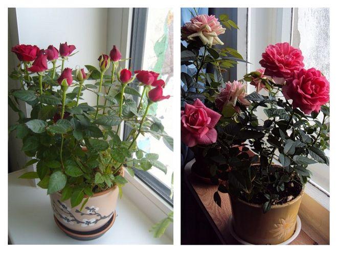 Освещение для розы