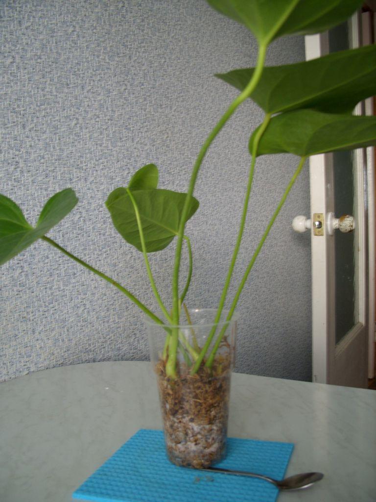 Прорастание новых корней