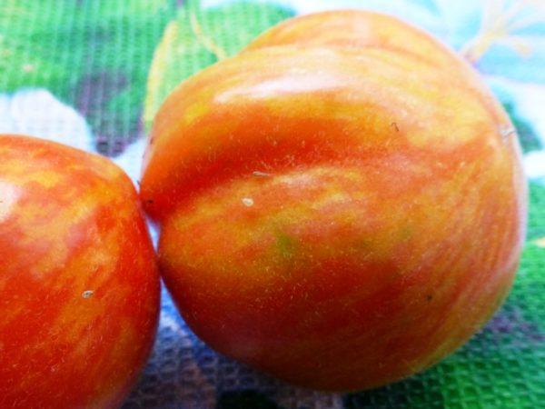 эльберта персиковая