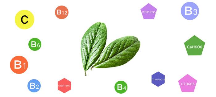 Витамины в листьях брусники