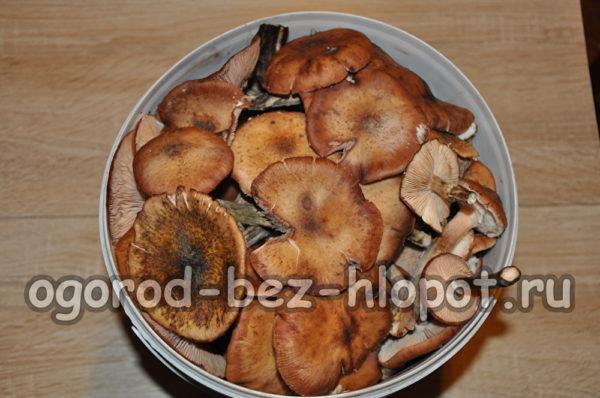 грибы перебрать