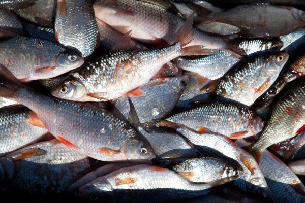 Календарь рыболова на 2021 год по месяцам