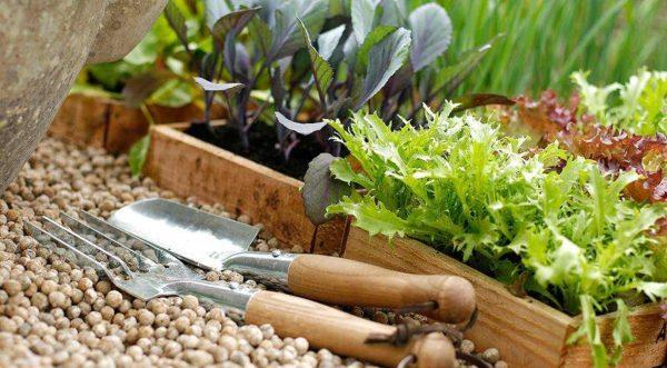 Календарь посадок овощей на 2019 год: советы и таблица