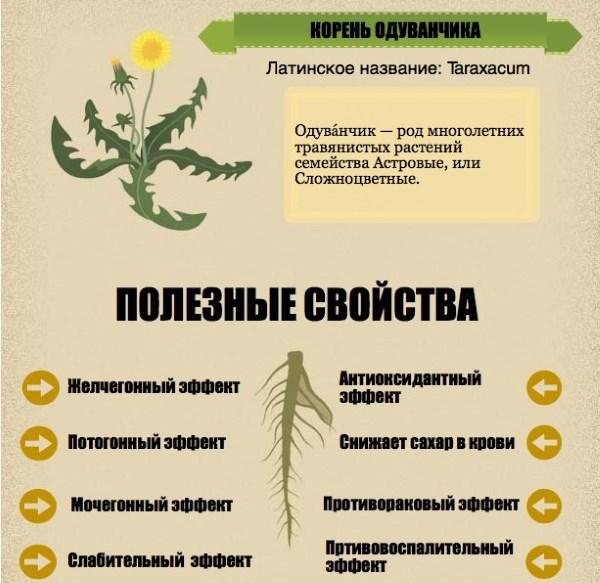 Полезные свойства корня одуванчика