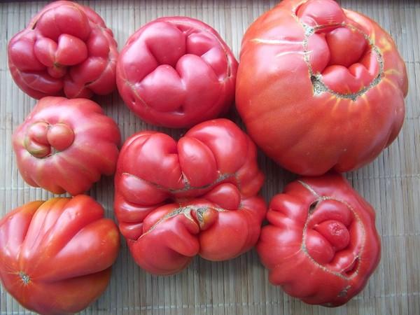страшные томаты