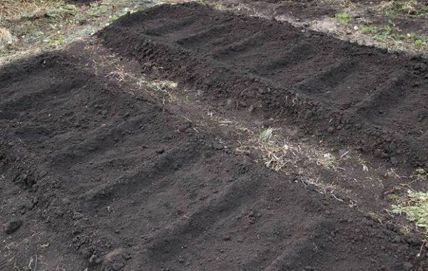 Спаржевая фасоль особенности выращивания и ухода