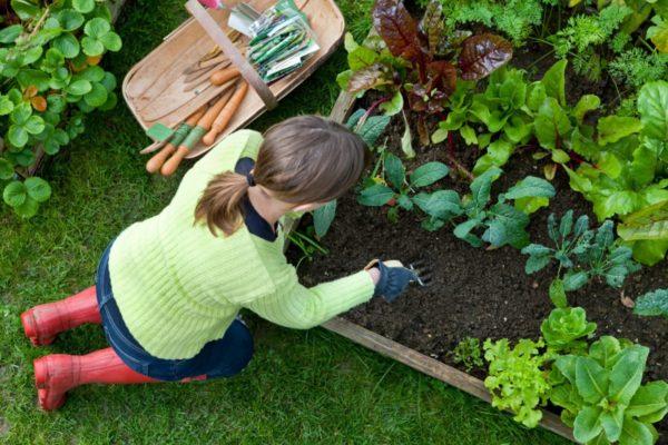 Фазы луны в июле 2019 года для садоводов и огородников