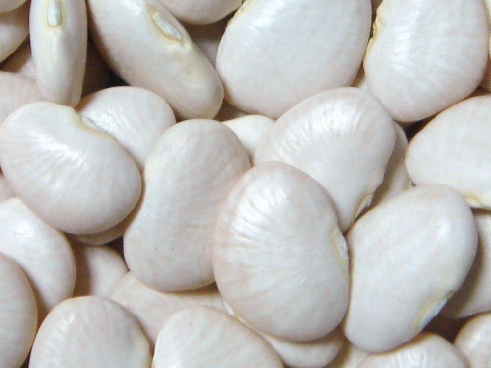 white-lima-Beans.jpg