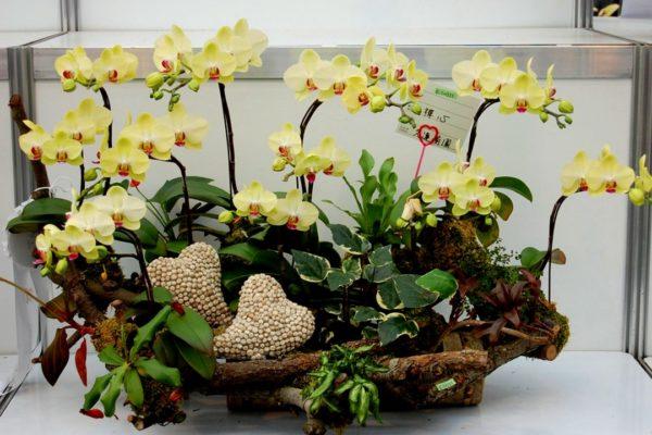 kompozicii-iz-orhidej