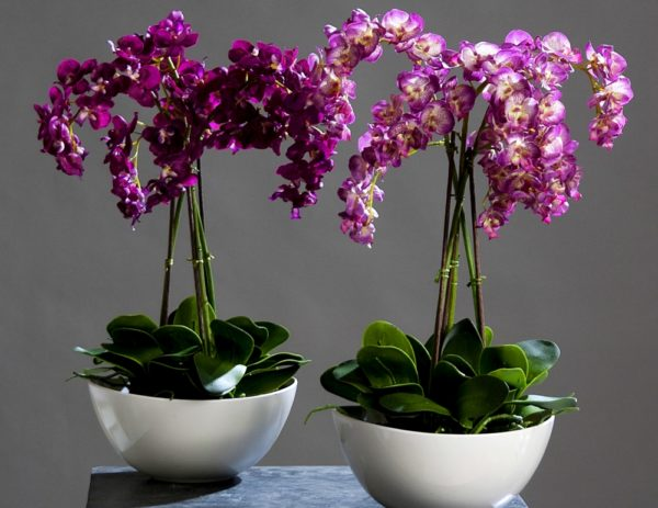 kompozicii iz orhidej