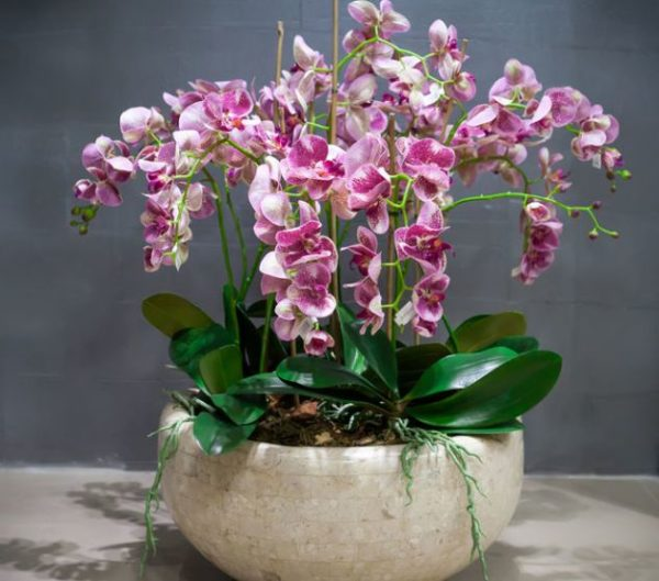 neskolko orhidej